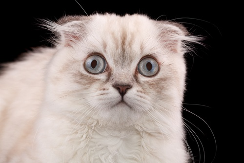 Scaredy Cat? How To Start Your Website